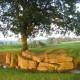Krachtplek, Weris, Belgische Ardennen, dolmen, stervensbegeleiding, cursus loslaten, overgang