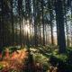 Herfst in Belgie, stilte
