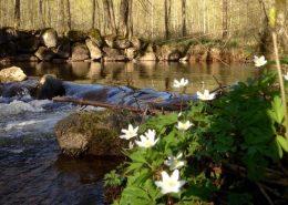 Spring in Belgium