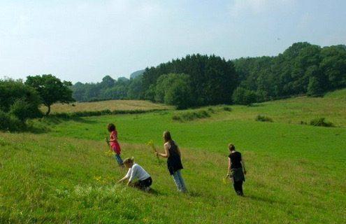 Zomer in Belgische Ardennen